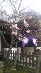 平野神社②
